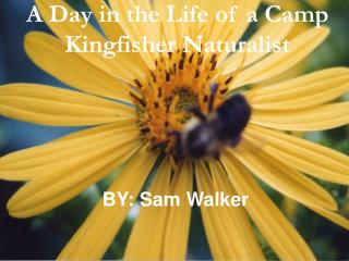 A Day in the Life of a Camp Kingfisher Naturalist