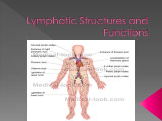 Lymphatic Structures and Functions