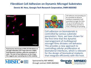 Fibroblast Cell Adhesion on Dynamic Microgel Substrates
