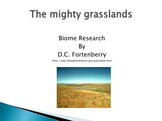 The mighty grasslands