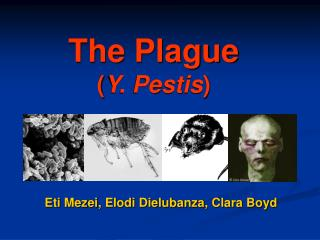 The Plague ( Y. Pestis )
