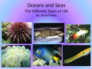 Oceans and Seas The Different Types of Life By: Jacob Padilla