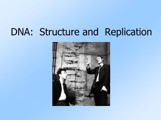 DNA:  Structure and  Replication
