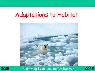 Adaptations to Habitat