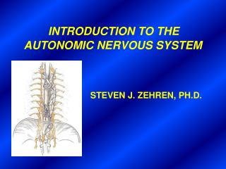 INTRODUCTION TO THE  AUTONOMIC NERVOUS SYSTEM STEVEN J. ZEHREN, PH.D.