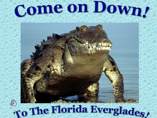 To The Florida Everglades!