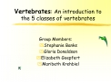 Vertebrates: An introduction to the 5 classes of vertebrates