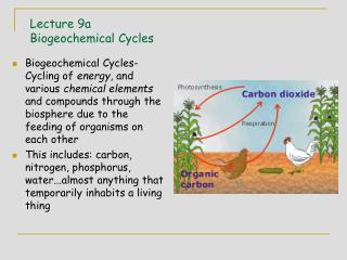 Lecture 9a Biogeochemical Cycles