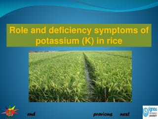 Role  and deficiency symptoms of potassium (K) in rice