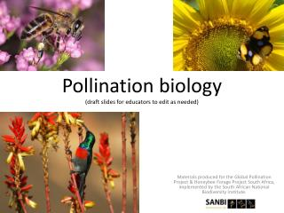 Pollination biology  (draft slides for educators to edit as needed)