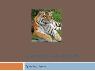 Imitate the Tiger