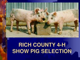 RICH COUNTY 4-H  SHOW PIG SELECTION