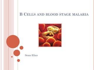 B Cells and blood stage malaria