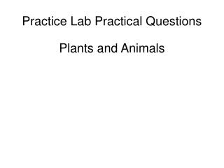 Practice Lab Practical Questions