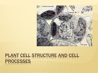 Plant Cell Structure and Cell Processes