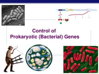 Control of  Prokaryotic (Bacterial) Genes