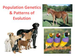 Population Genetics & Patterns of Evolution