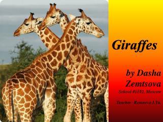 Giraffes by Dasha Zemtsova School #1192, Moscow Teacher: Remneva I.Yu .