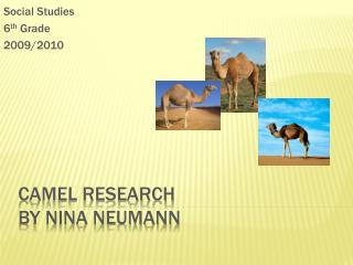 Camel Research By Nina Neumann