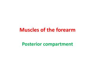 Muscles of the forearm