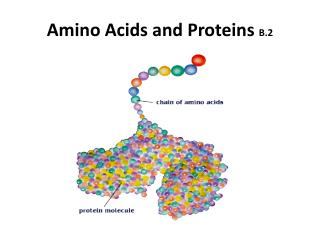 Amino Acids and Proteins  B.2