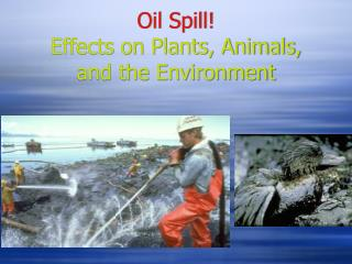 Oil Spill! Effects on Plants, Animals, and the Environment