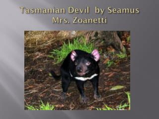Tasmanian  Devil   by  Seamus   Mrs .  Zoanetti