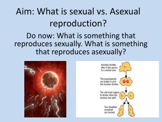 Aim: What is sexual vs. Asexual reproduction?