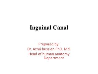 Inguinal Canal