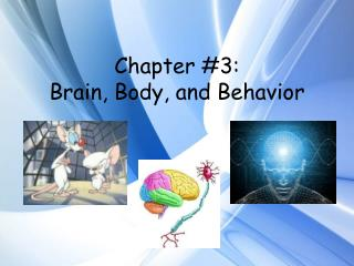 Chapter #3: Brain, Body, and Behavior