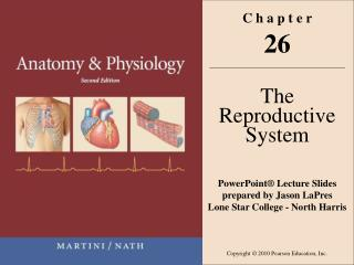 C h a p t e r 26 The Reproductive System