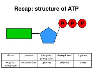 Recap: structure of ATP