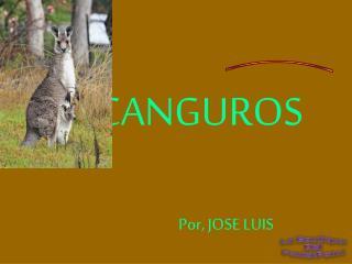 CANGUROS Por, JOSE LUIS