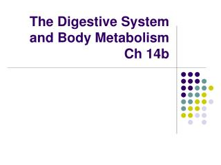 The Digestive System and Body Metabolism Ch 14b
