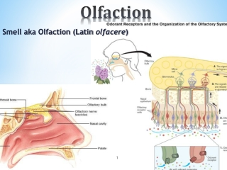 Olfactory Dysfunction and Disorders