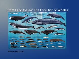 From Land to Sea: The Evolution of Whales