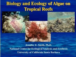 Biology and Ecology of Algae on Tropical Reefs