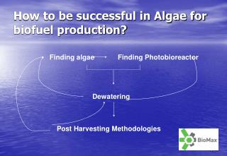 How to be successful in Algae for biofuel production?