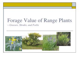 Forage Value of Range Plants ~ Grasses, Shrubs, and Forbs
