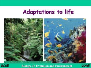 Adaptations to life