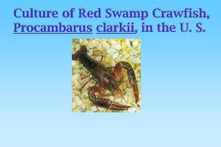 Culture of Red Swamp Crawfish, Procambarus clarkii ,  in the U. S.