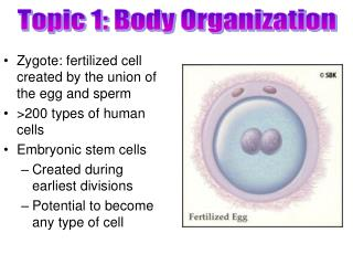 Topic 1: Body Organization