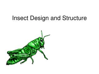 Insect Design and Structure