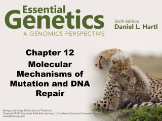 Chapter 12 Molecular Mechanisms of Mutation and DNA Repair