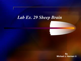 Lab Ex. 29 Sheep Brain