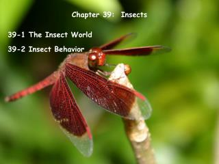 Chapter 39:  Insects