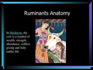 Ruminants Anatomy