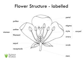 Flower Structure - labelled
