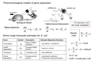 Phenomenological models of gene expression