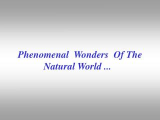 Phenomenal  Wonders  Of The Natural World ...